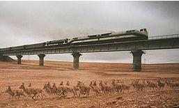 Chinese Antelope/Train Photo