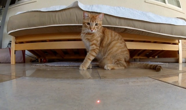 Laser Cats Meet GoPro