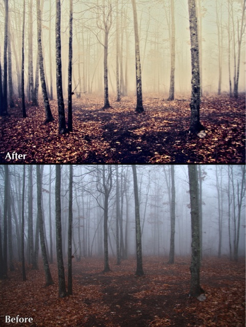 trees_ba_ReStyle