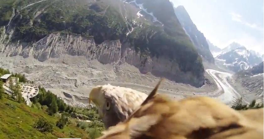 Eagle POV Video