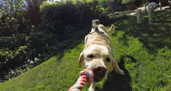 GoPro Fetch 1