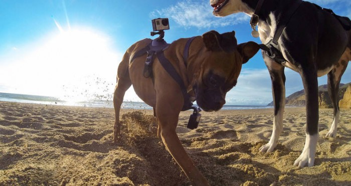 GoPro Fetch 2