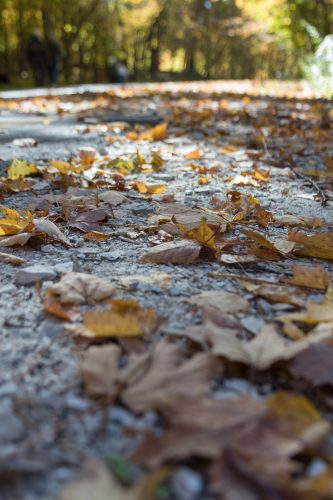 Leaves on the Ground in Fall at Holy Hill | Copyright: Rose Clearfield